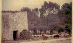 L'Association Moulin de Bertoire (Lambesc, Bouches du Rhône), une association à couper le souffle… qui restaure un moulin à vent provençal