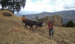Colombie : Les derniers survivants de la riche tradition céréalière et meunière