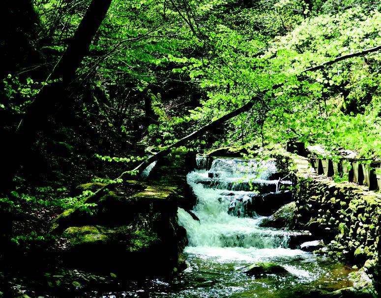 Moulin de La Laurède - Prise d'eau sur le ruisseau du Baillès. Photo Colette Denier