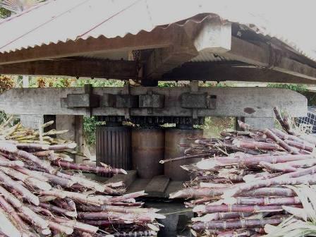 Moulin à sucre, manège